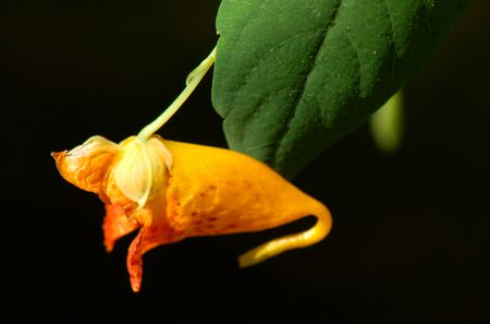 Treatment For Poison Ivy Rash Jewelweed Medical Means