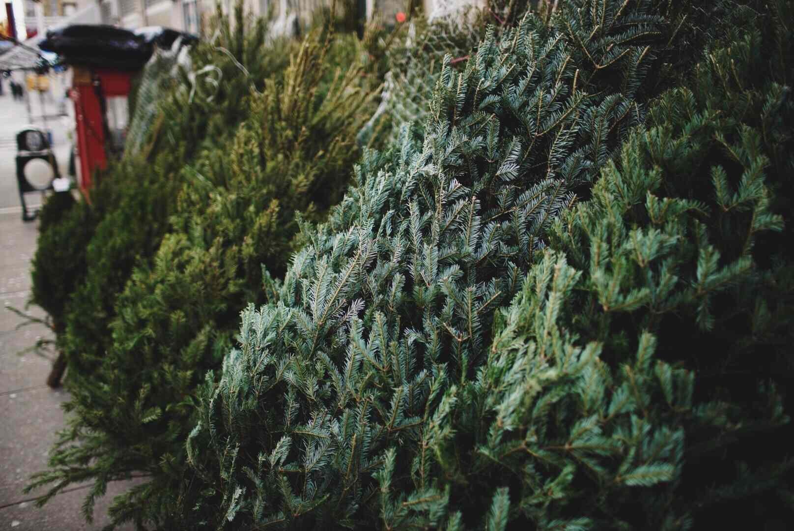 The 8 Best Places To Buy A Christmas Tree In 2019