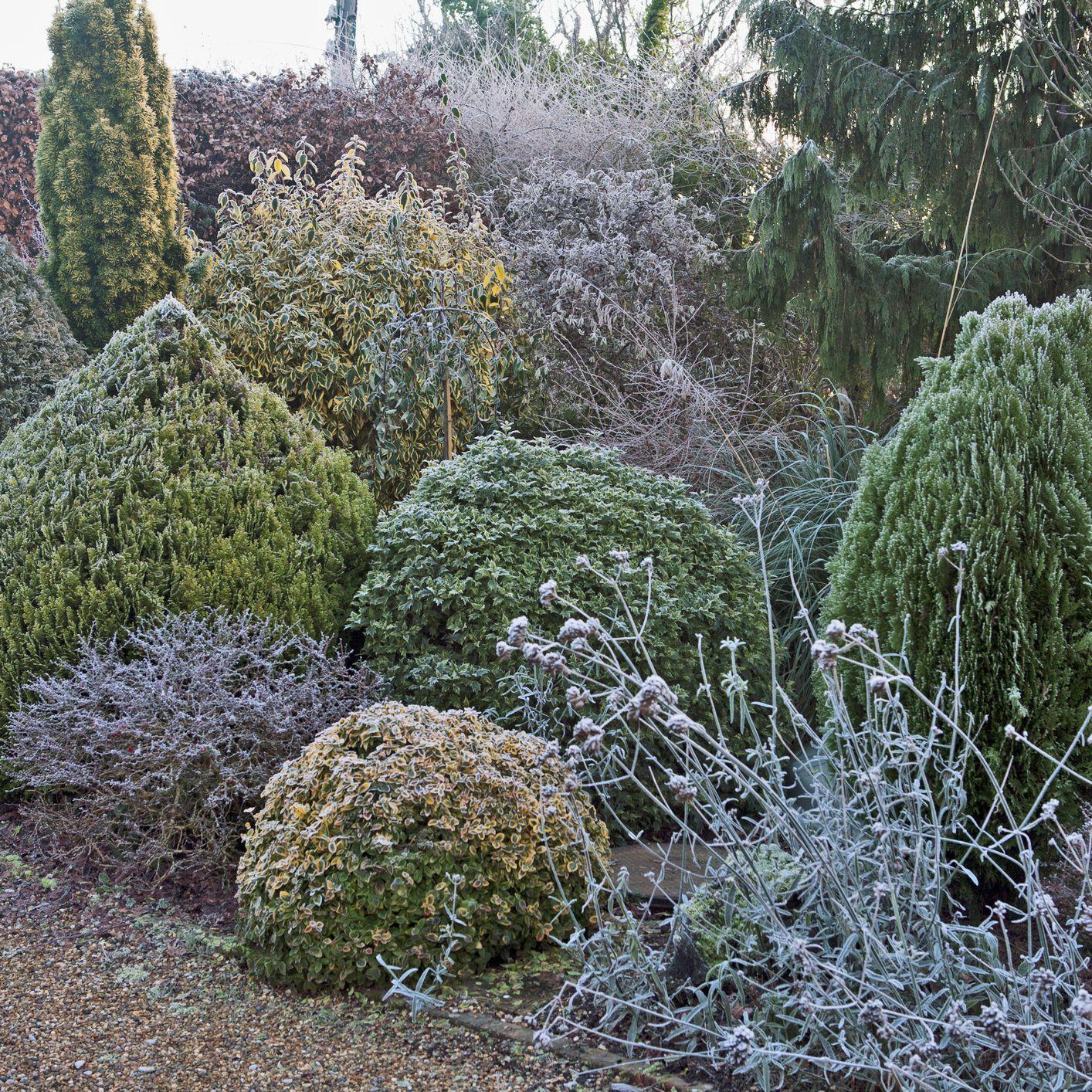 Creating Four Season Interest With Dwarf Evergreens