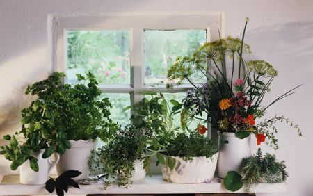 Orted Herbs On Windowsill