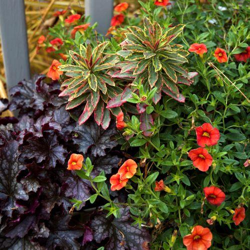 Shade Garden Plants Landscaping Ideas House