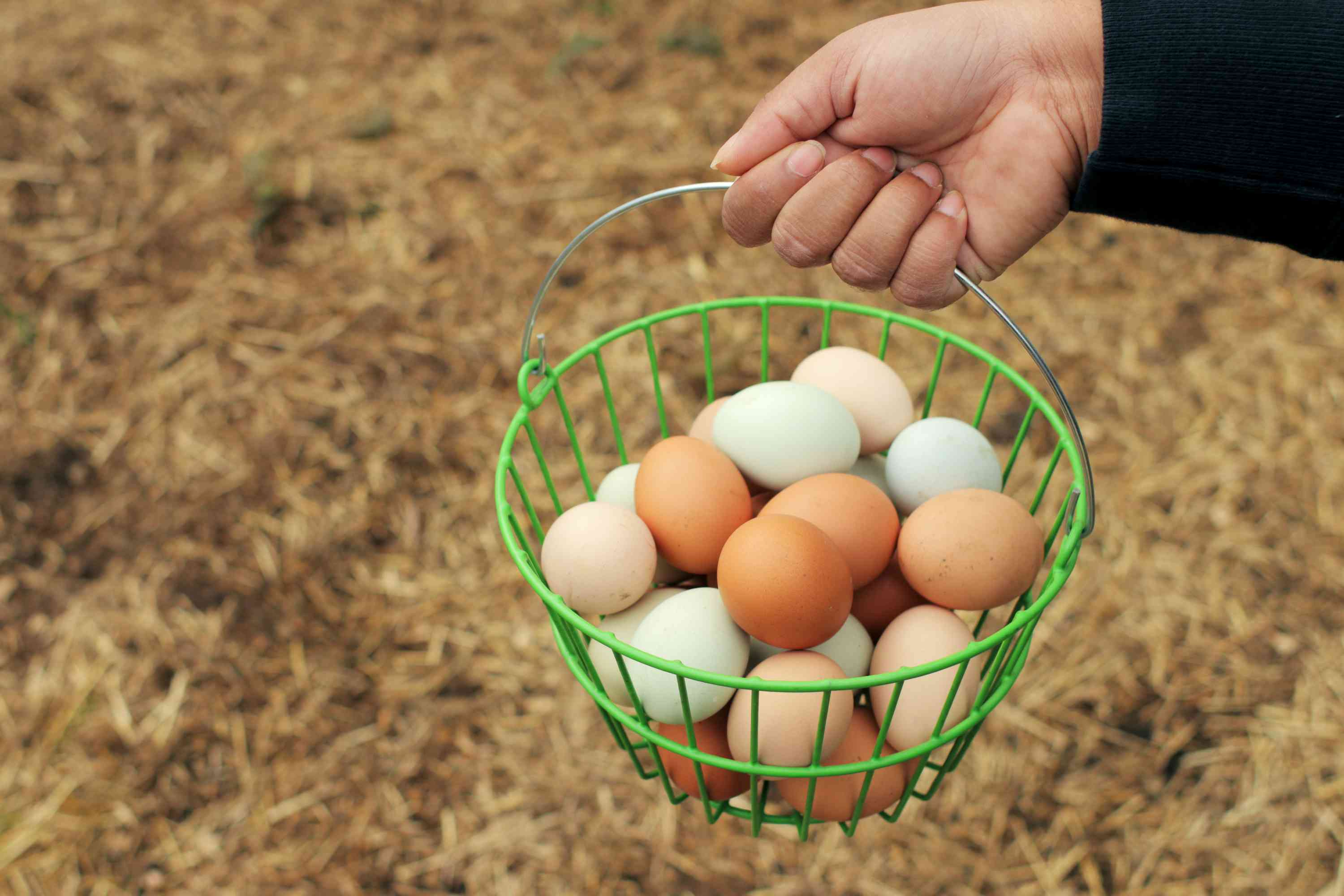 person gathering eggs in a basket