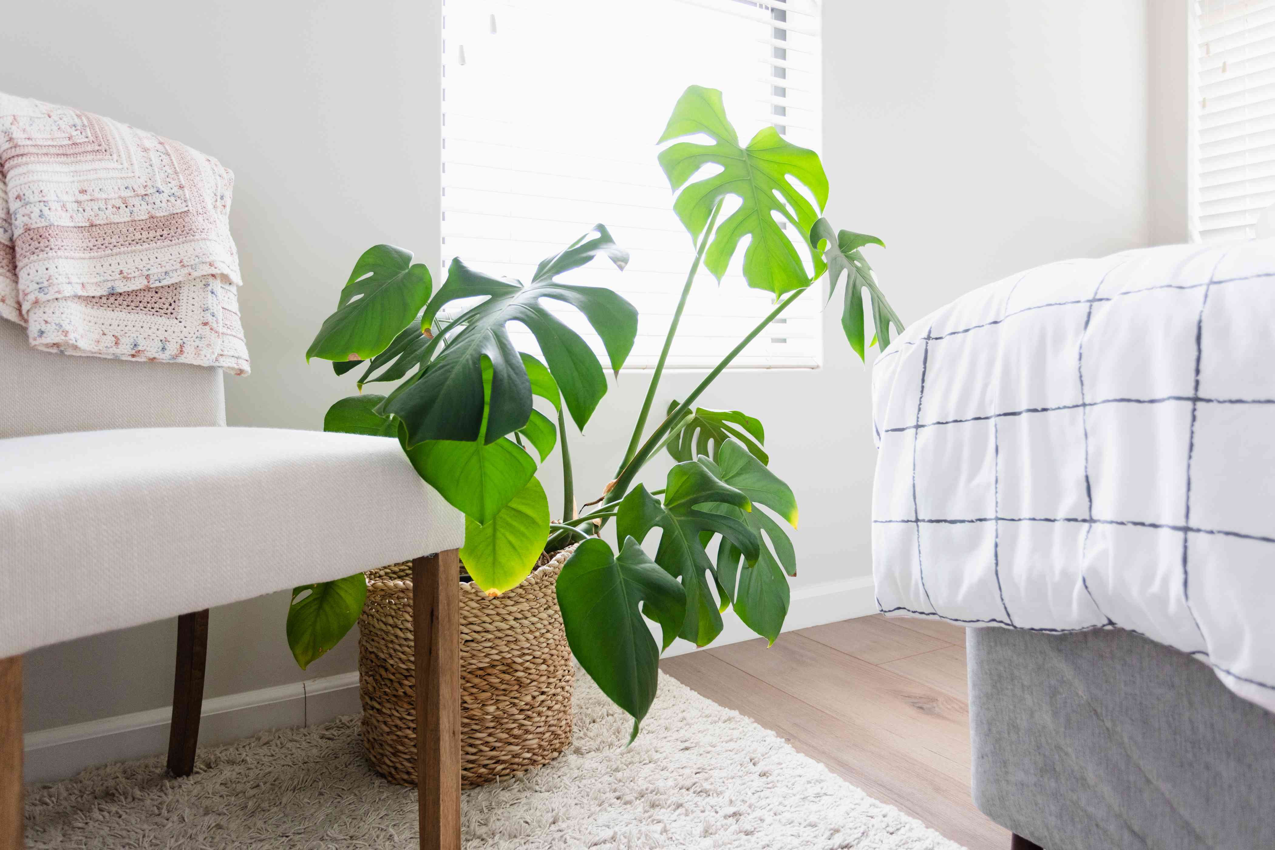 Monstera houseplant next to white chair and bed corner