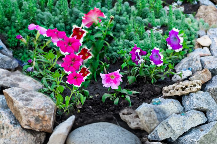 How To Get Free Rocks For Your Garden, Rocks In A Garden
