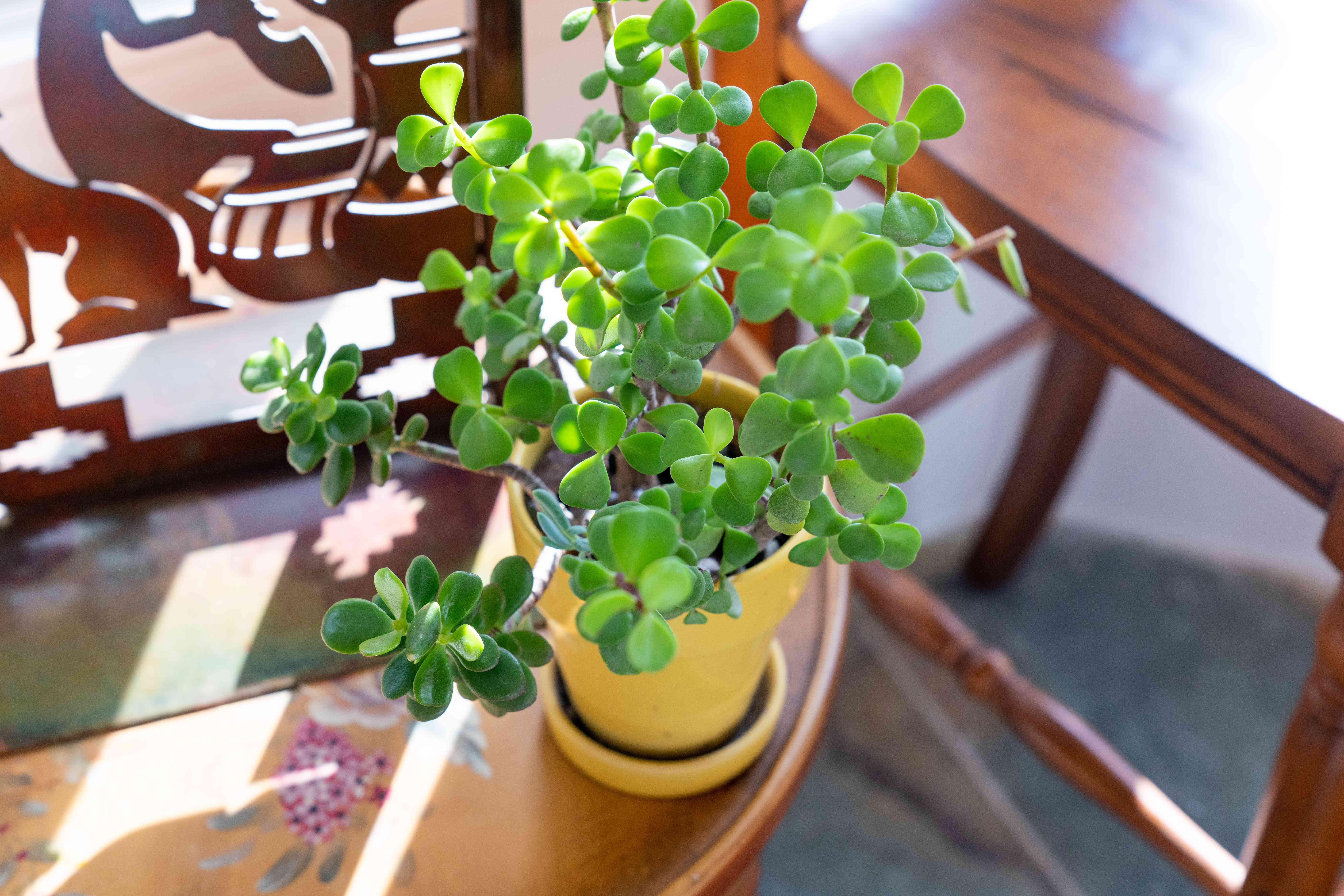 moving potted plants indoors for the winter