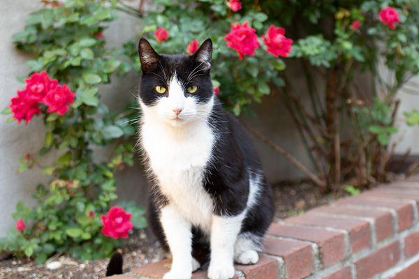 stray cat in a backyard