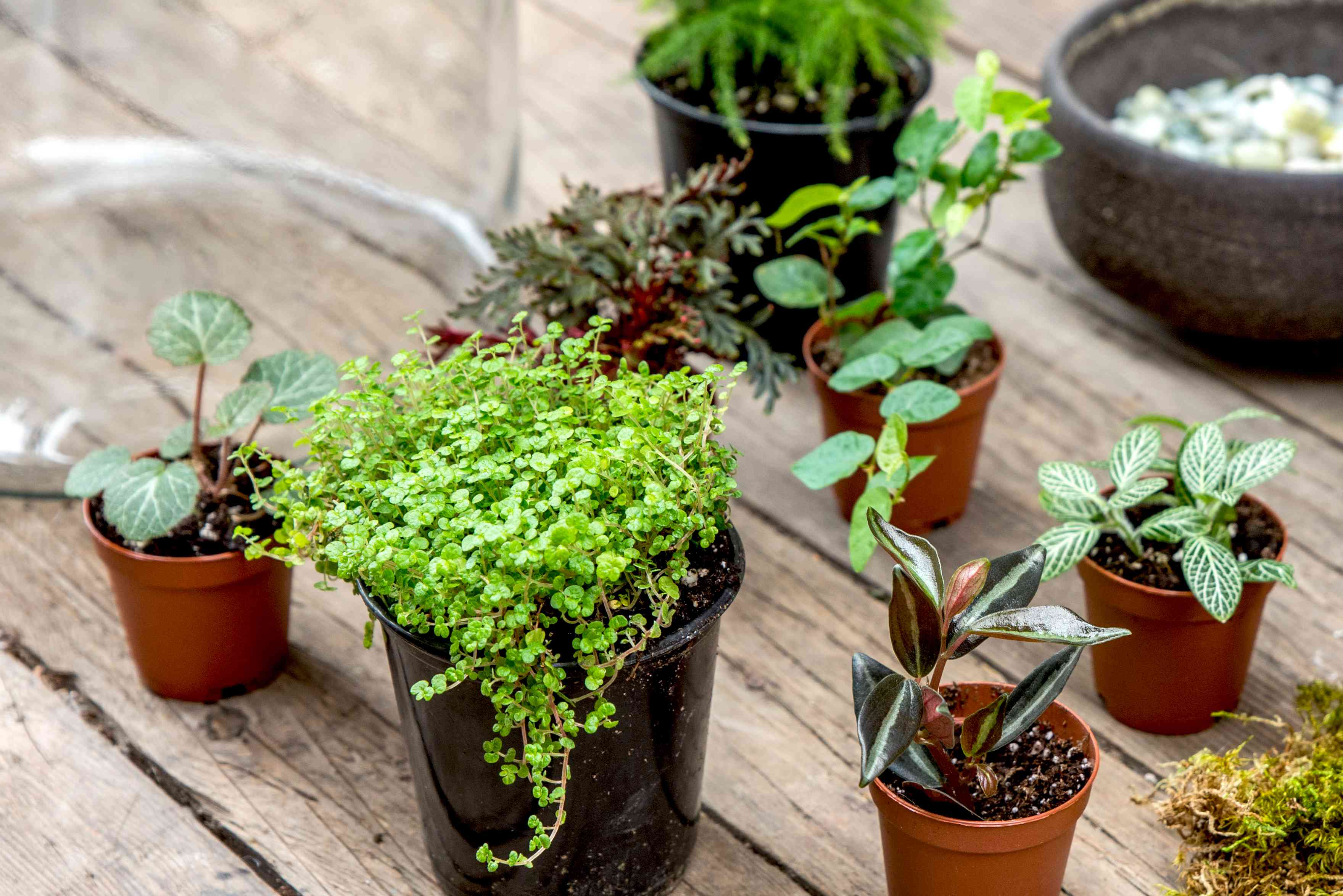choosing plants for your terrarium