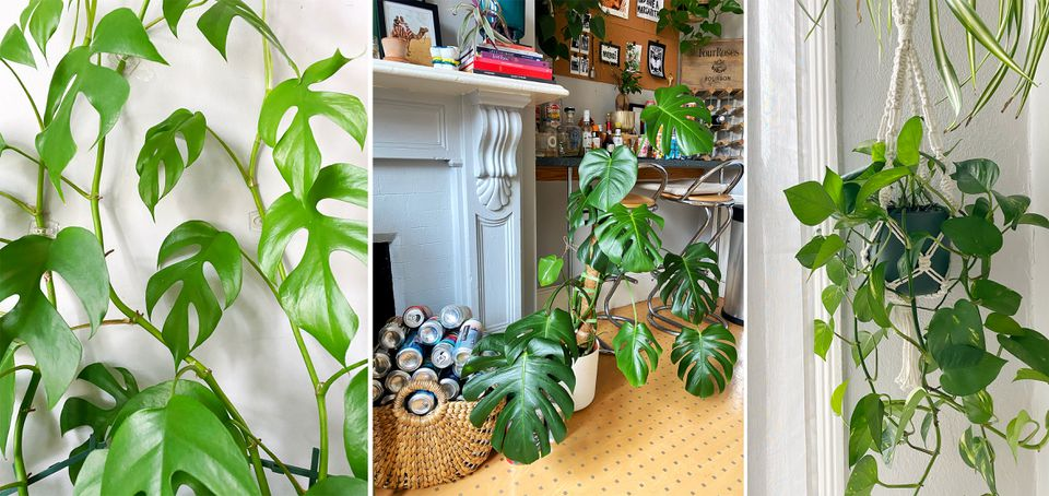 Taylor Fuller's lush, growing plants