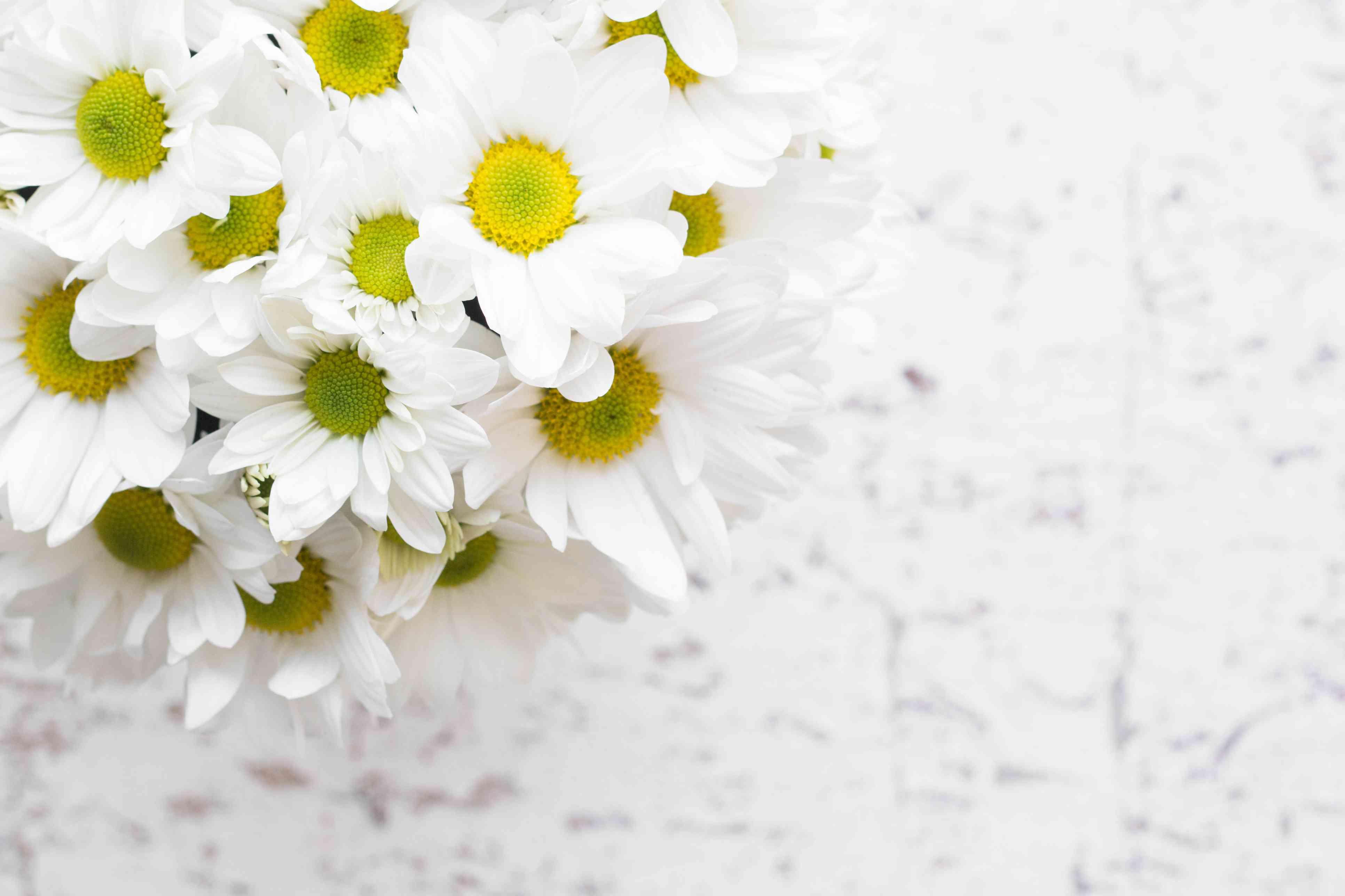 Macro del hermoso ramo de flores de margarita