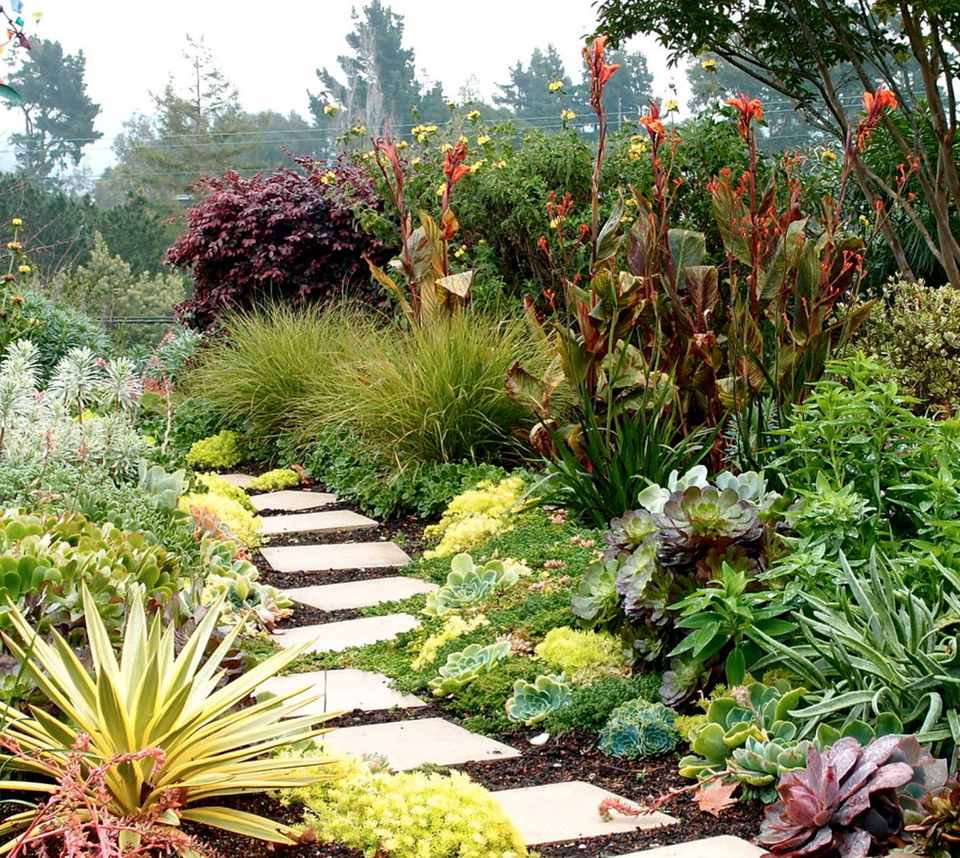 pavers in colorful succulent garden